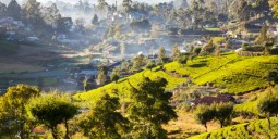 Flights to Nuwara Eliya